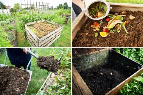 Préparer son compost maison pour un jardin bien nourri